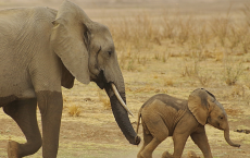 Mothers' Appetites Keep Size Of Wild Animals' Groups On Point