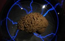 Large Mammalian Brain
