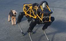 Real Dog Meets Robot Dog