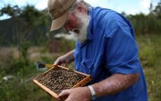 Honeybees decline