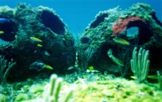 Cremated Remains Used To Help Create Artificial Reef Credit: Getty Images / Handout