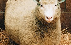 Dolly The Sheep: Cloning Isn't Linked To Early Ageing, New Study Says