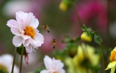 Major Drought Impacts California Flower Industry