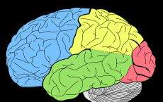 different regions of the brain
