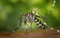 Mosquito Feeding on Human Blood