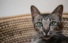 Balinese Cat Shelter Appeals For Adopters