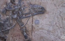 Dinosaur Fossils Found In China