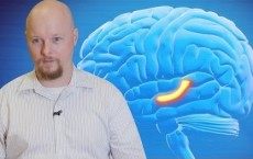 Neuron Behind Consciousness