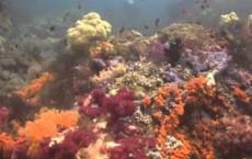 Coral Reefs Of Raja Ampat Islands