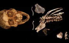 Origins Of The Human Spine: They Have Been Found In A Fossil Of 3.3 Million Years