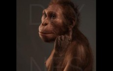A life reconstruction of Au. sediba, commissioned by the University of Michigan's Museum of Natural History