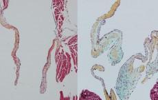 Nakano Developmental Cell 2019 (IMAGE)