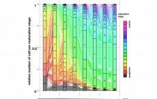 New machine learning model describes dynamics of cell development (Image)