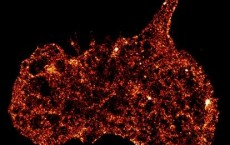 Research unlocks biomechanical mystery behind deadly blood clots