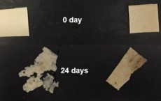Study shows potential for Earth-friendly plastic replacement