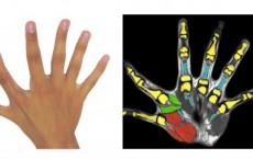Six Fingers Per Hand (IMAGE)
