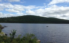 Fifty Years Later, DDT Lingers in Lake Ecosystems (IMAGE)