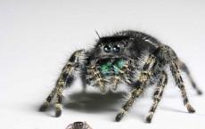 Spider Vision (IMAGE)