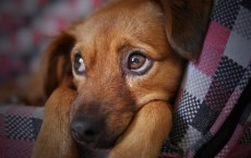 Dog Breeds Most Vulnerable to Joint Pain and Tips to Bar the Condition