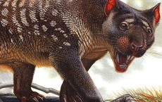 Climate Change Caused Extinction of Megafauna and Not Humans