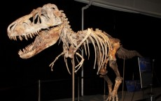 70-Million-Year-Old Smuggled Dinosaur Skeletons Returns to its Homeland in Mongolia
