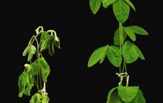 How Plants Evolved Over Time To Withstand Cold Climates