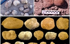 240-million-year-old Dinodontosaurus Poo Discovered in Argentina