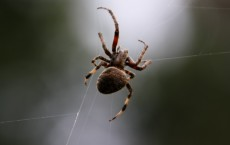 Spider Hanging in Web