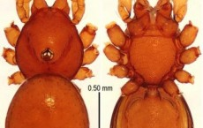 New Species of Cave Dwelling Armoured Spiders Discovered in China